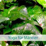 Yoga für Männer im YogiRaum